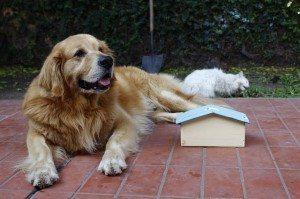 אילוף כלבים מקצועי
